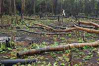 Small swidden, or slash and burn, gardens recycle forest nutrients and are not destructive to the Cerrado, unlike mass monocrop plantings that demand large amounts of chemicals. Photo by Guia D'Chapada (Flickr).