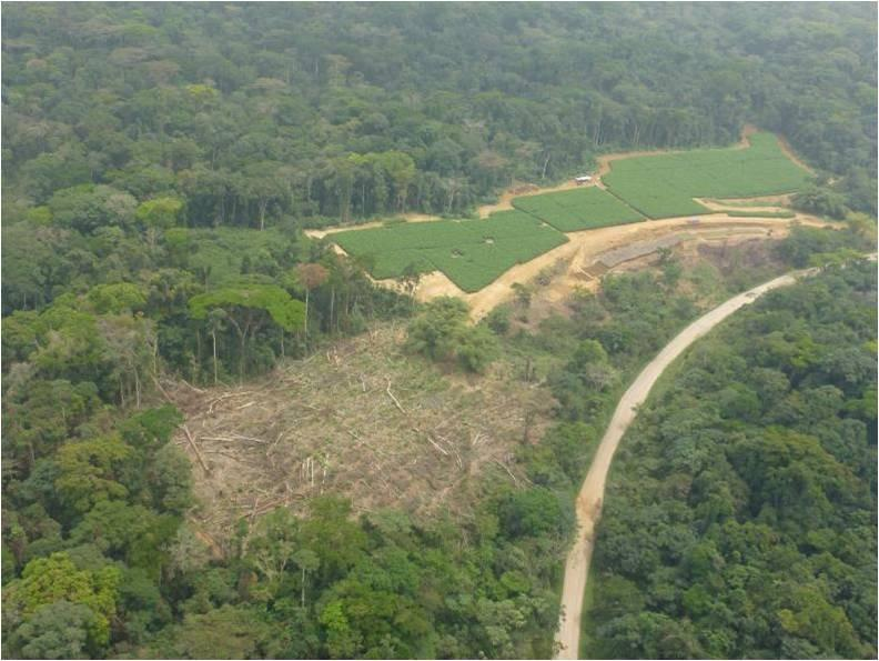 Cameroon: Stop Palm Oil Plantations from Destroying Africa's Ancient Rainforests and Local Livelihoods